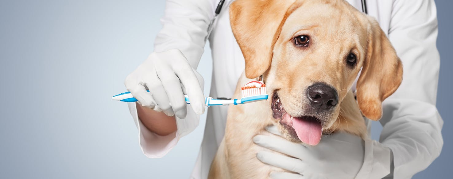 wellness-oral-hygiene-and-its-connection-to-your-dogs-health-hero-image