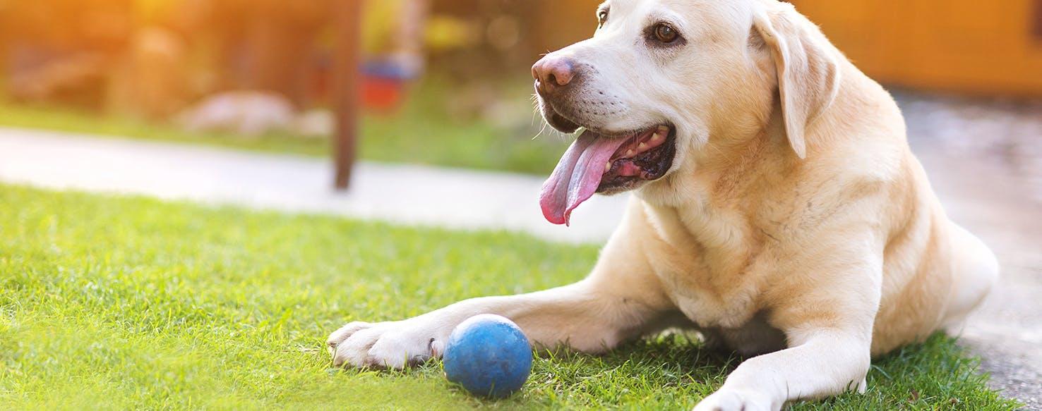 Dog Walking Insurance Companies