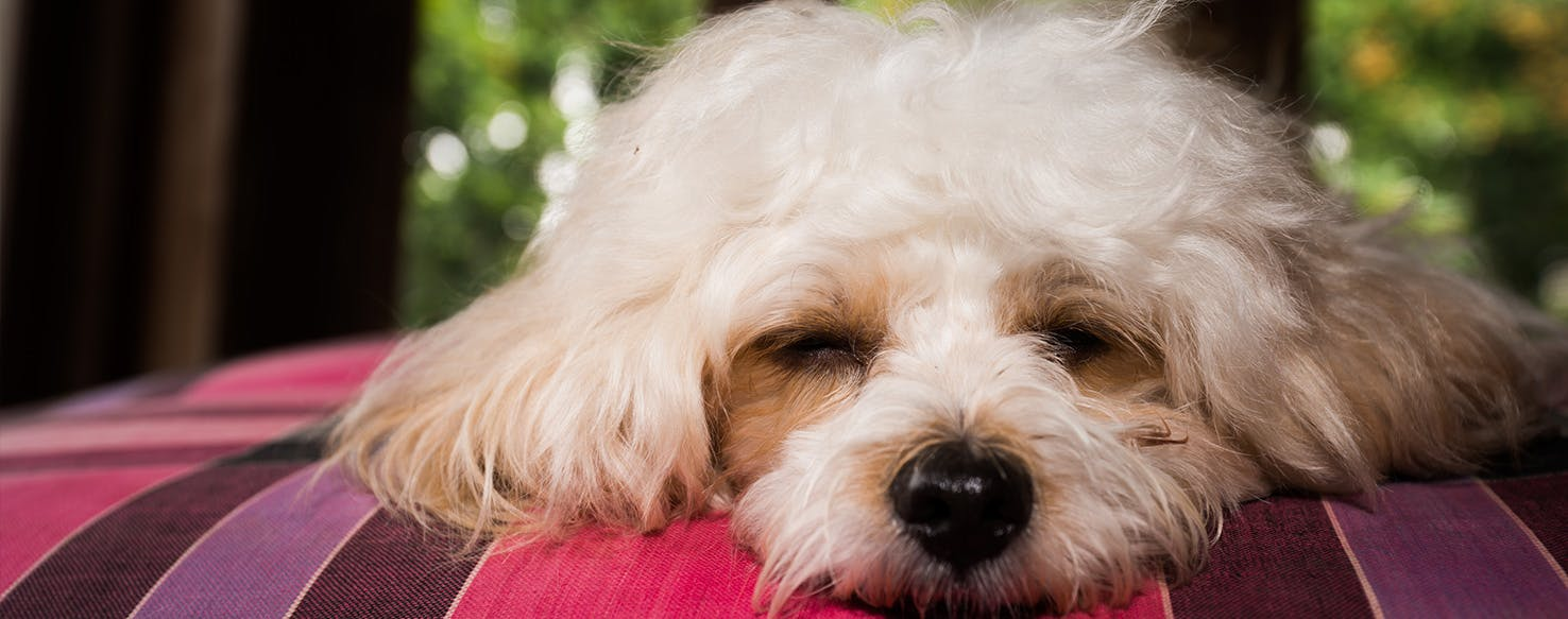 wellness-what-your-dogs-sleeping-positions-tell-you-about-his-health-and-personality-hero-image