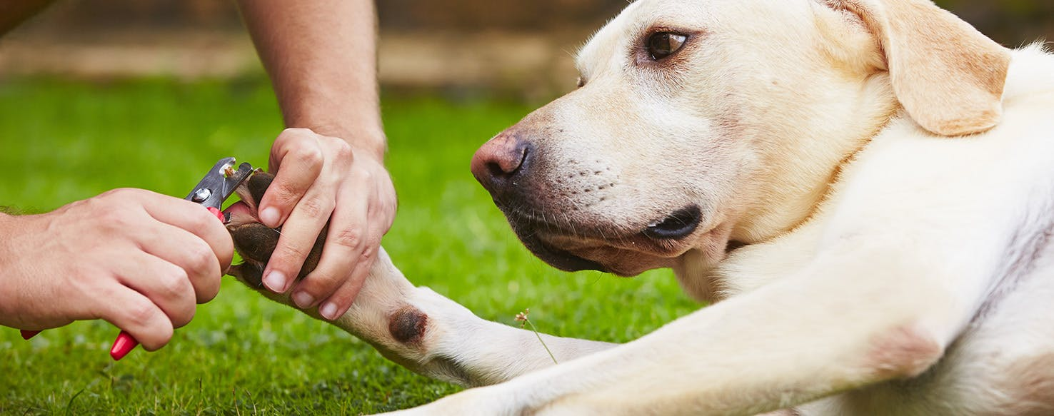 wellness-why-are-your-dogs-toenails-bleeding-and-how-can-you-stop-it-hero-image