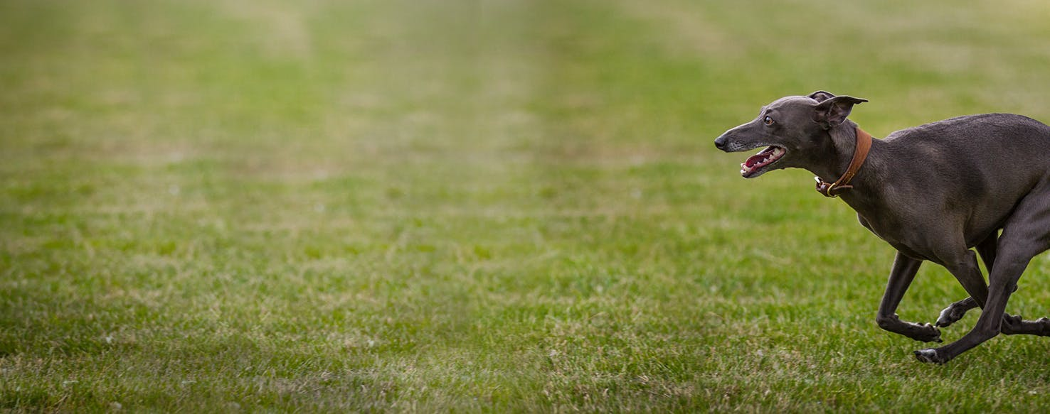 What are my dog's legs shaking? - JustAnswer