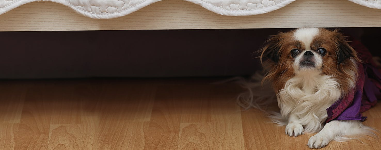 Why Dogs Like To Go Under The Bed Wag
