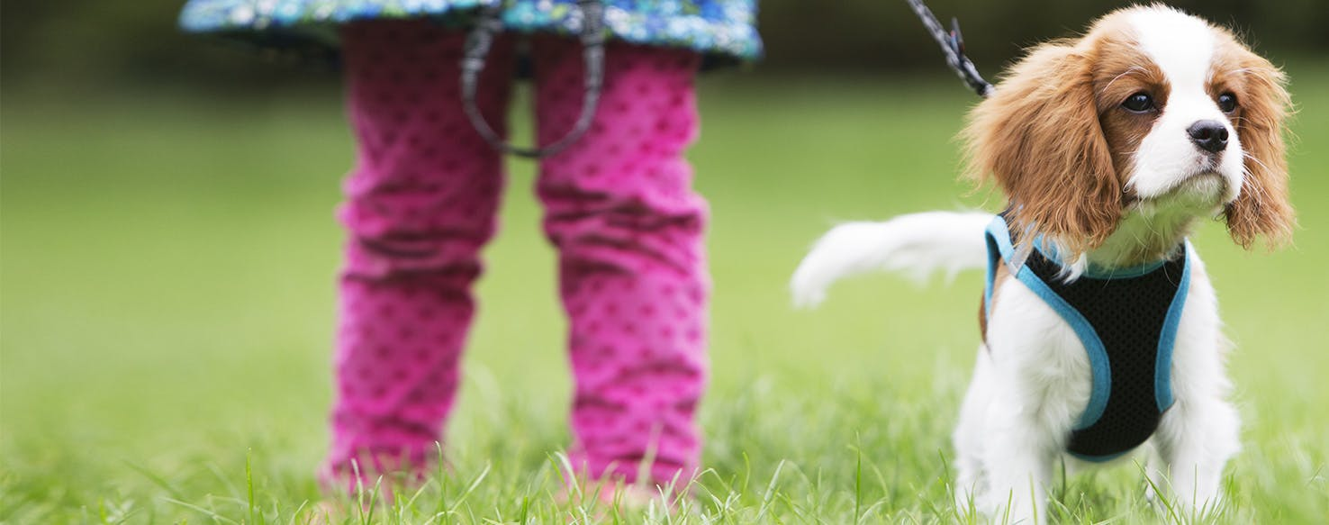 Why Do Dogs Walk With Their Tails Up - Wag!