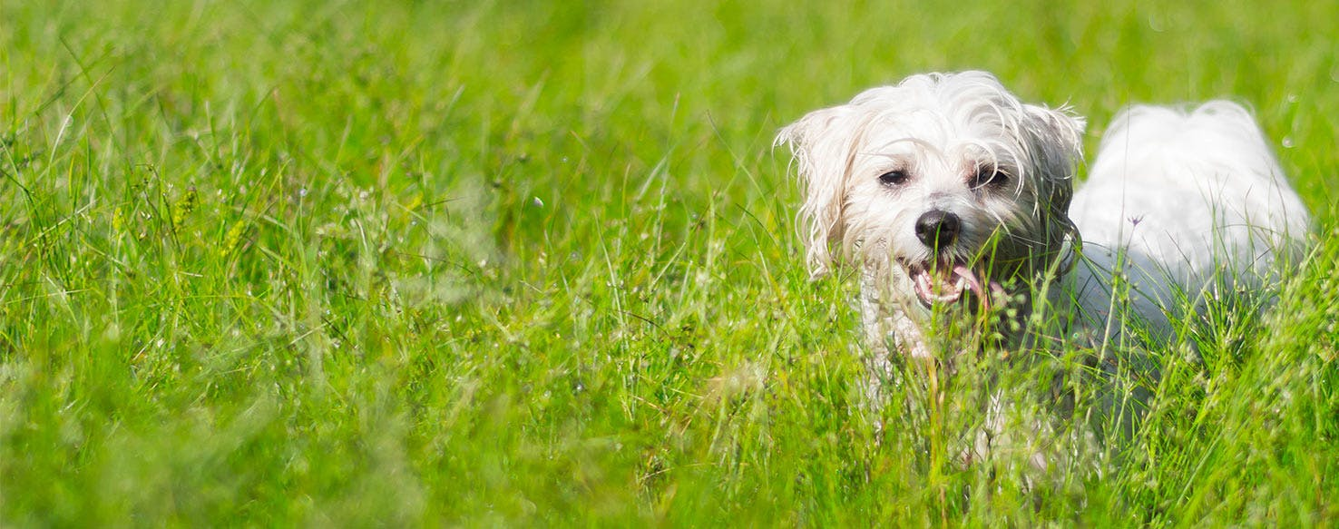 Why Do Dogs Try To Hide When They Are Dying - Wag!