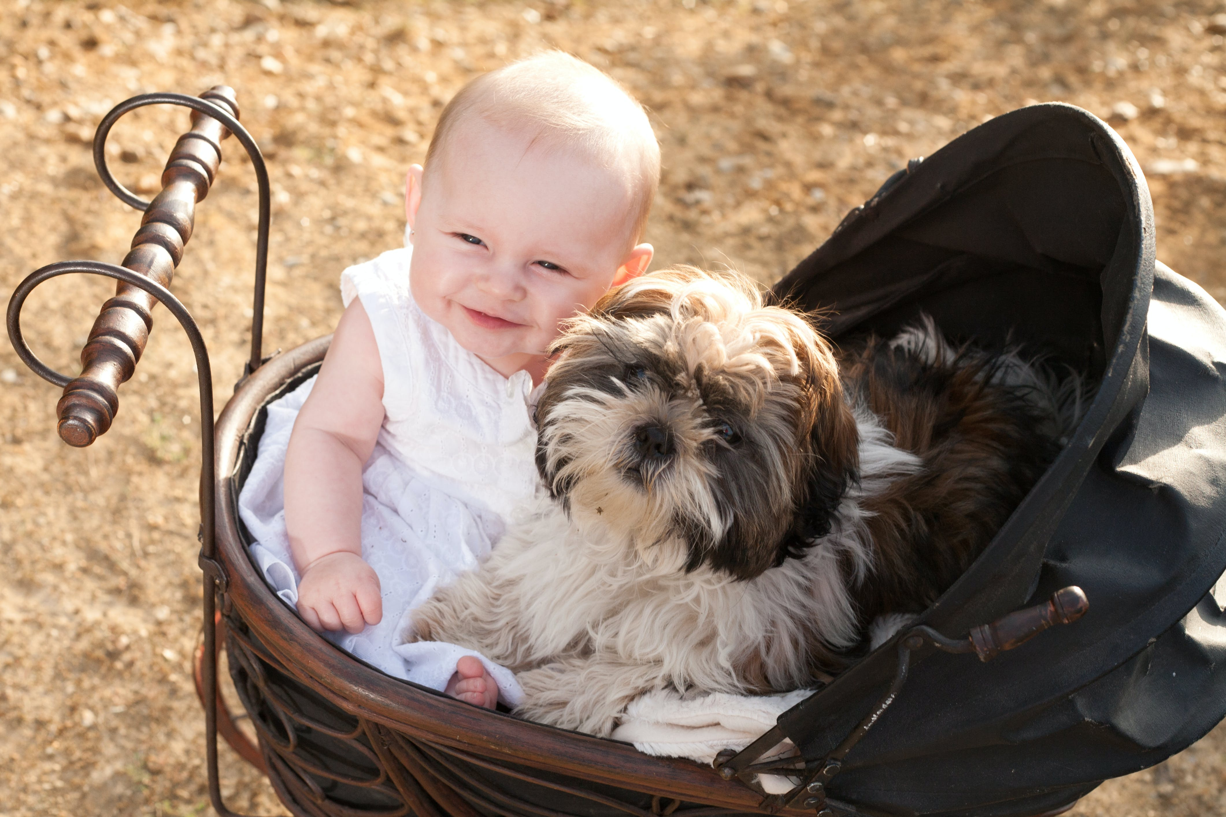 Why Do Dogs Get Jealous Of Babies Wag