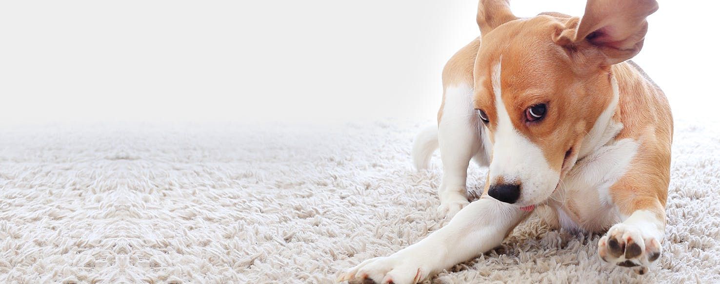 Why Dogs Breathe Fast When Sleeping Wag