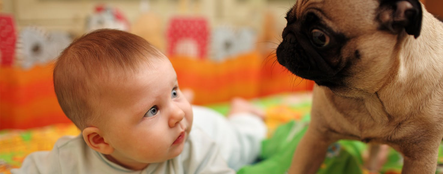 Why Dogs Bite Babies - Wag!