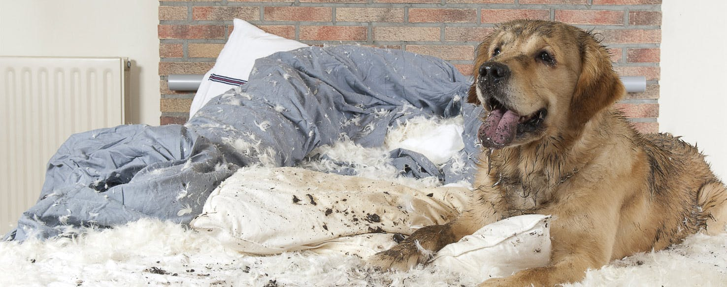Why Dogs Destroy Their Beds Wag