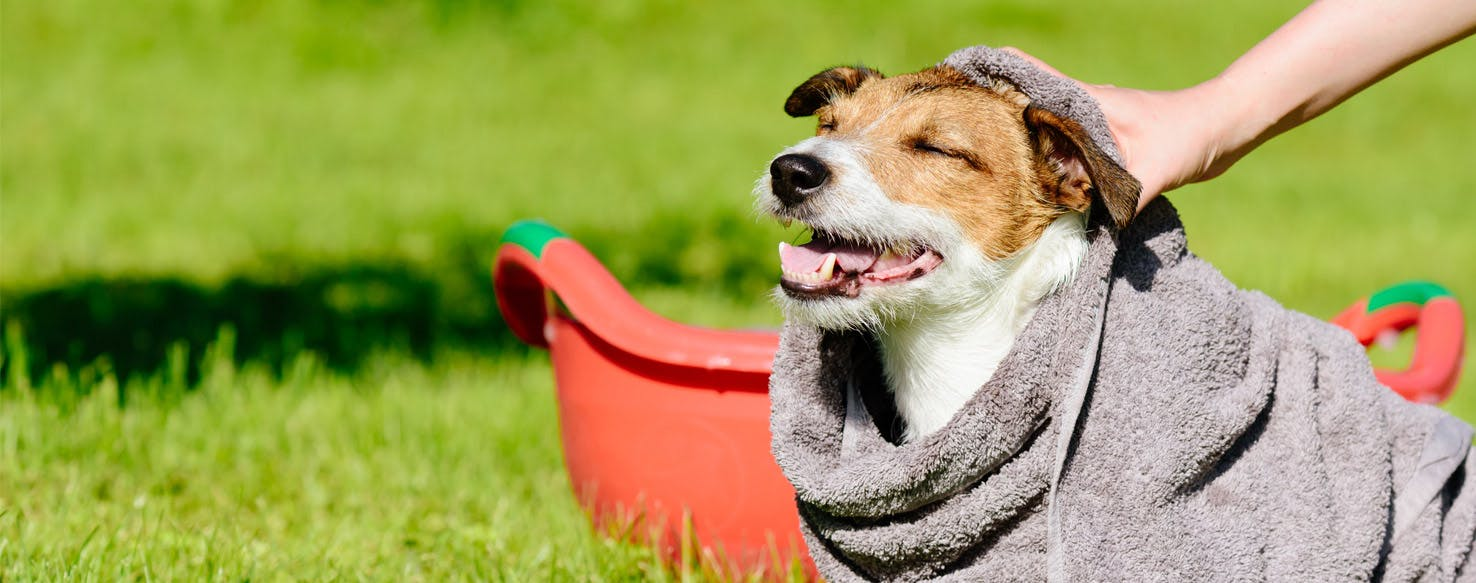 Why Dogs Don't Have To Wipe - Wag!