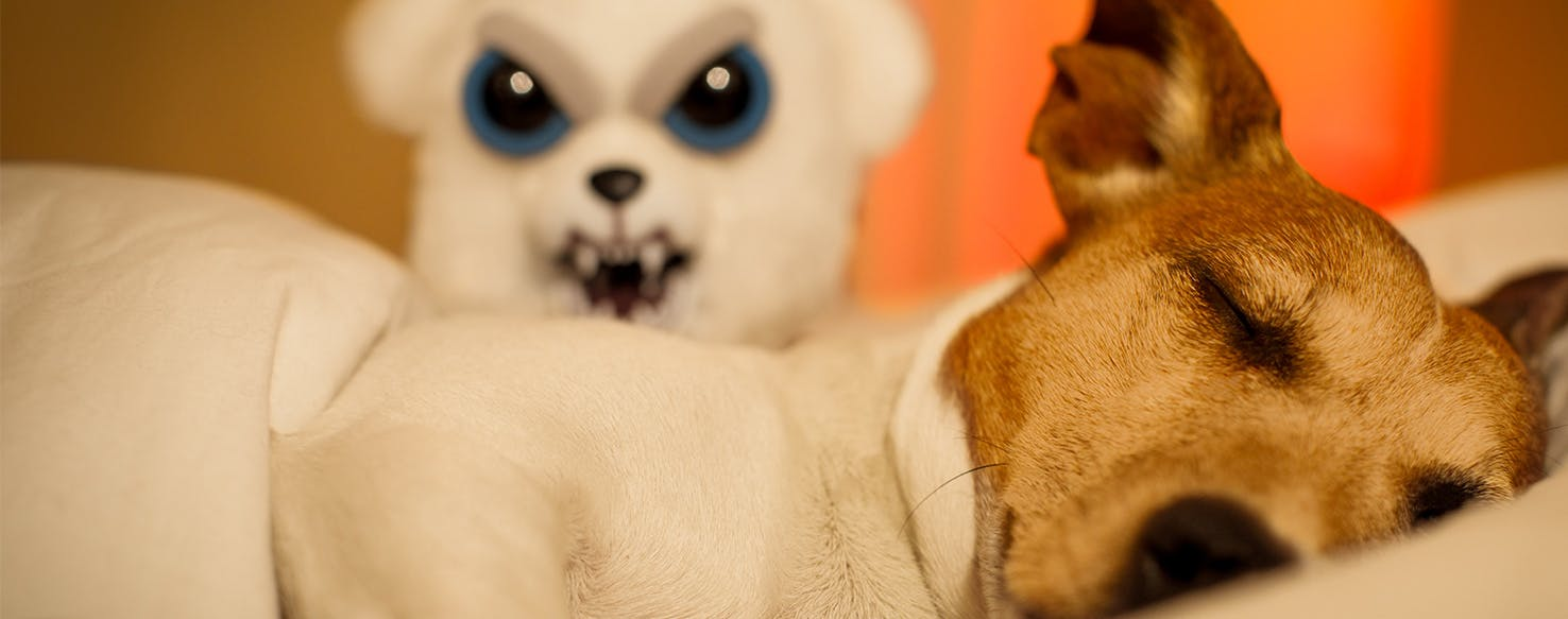 Why Dogs Have Nightmares Wag