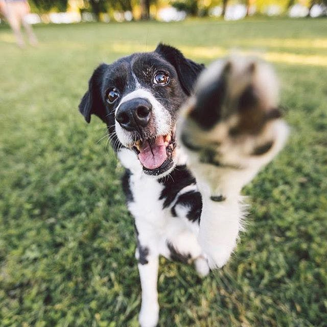 daily-wag-guest-article-five-simple-habits-that-make-traveling-with-your-dog-easy-hero-image