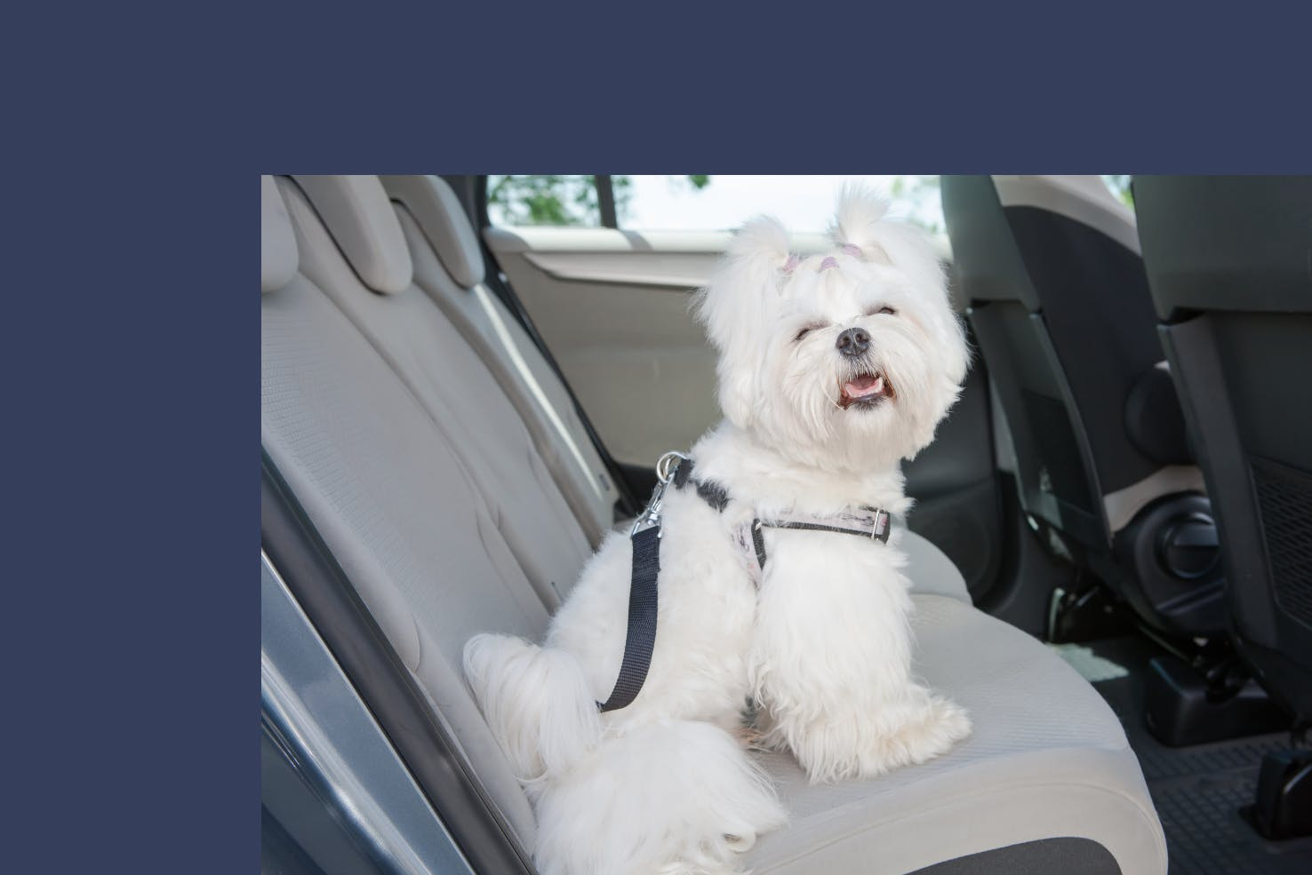 daily-wag-car-sickness-in-dogs-hero-image