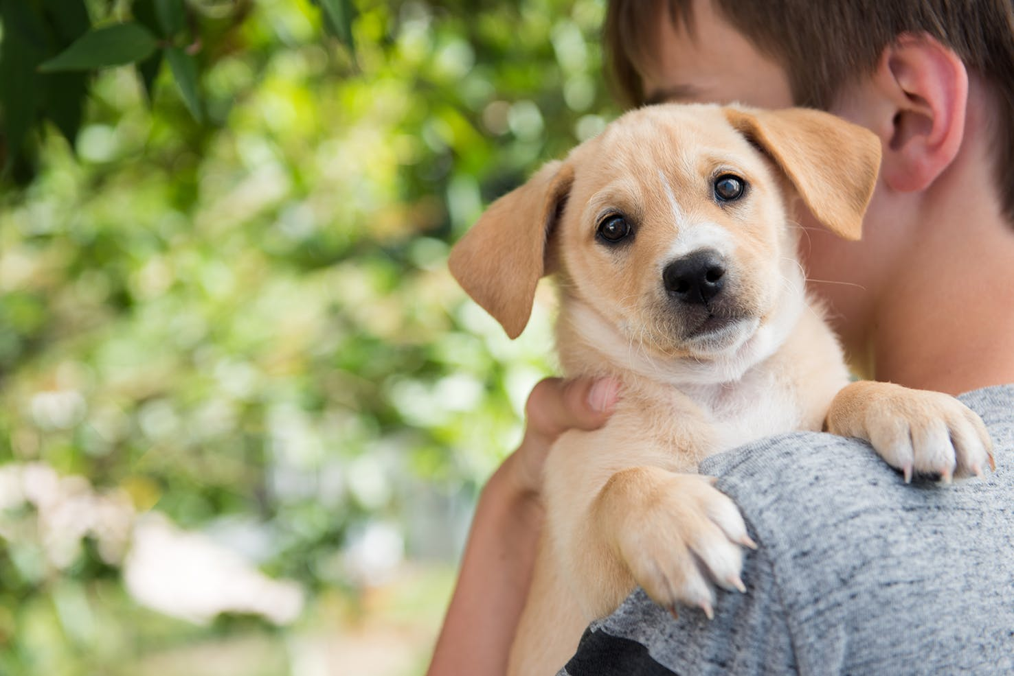 daily-wag-wag-and-adopt-a-petcom-team-up-to-introduce-more-people-to-the-joys-of-dog-parenthood-hero-image