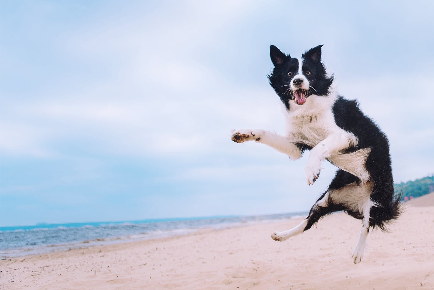 daily-wag-whats-in-a-dogs-name-hero-image