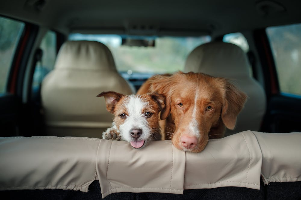 daily-wag-top-dog-friendly-road-trip-destinations-in-pennsylvania-hero-image