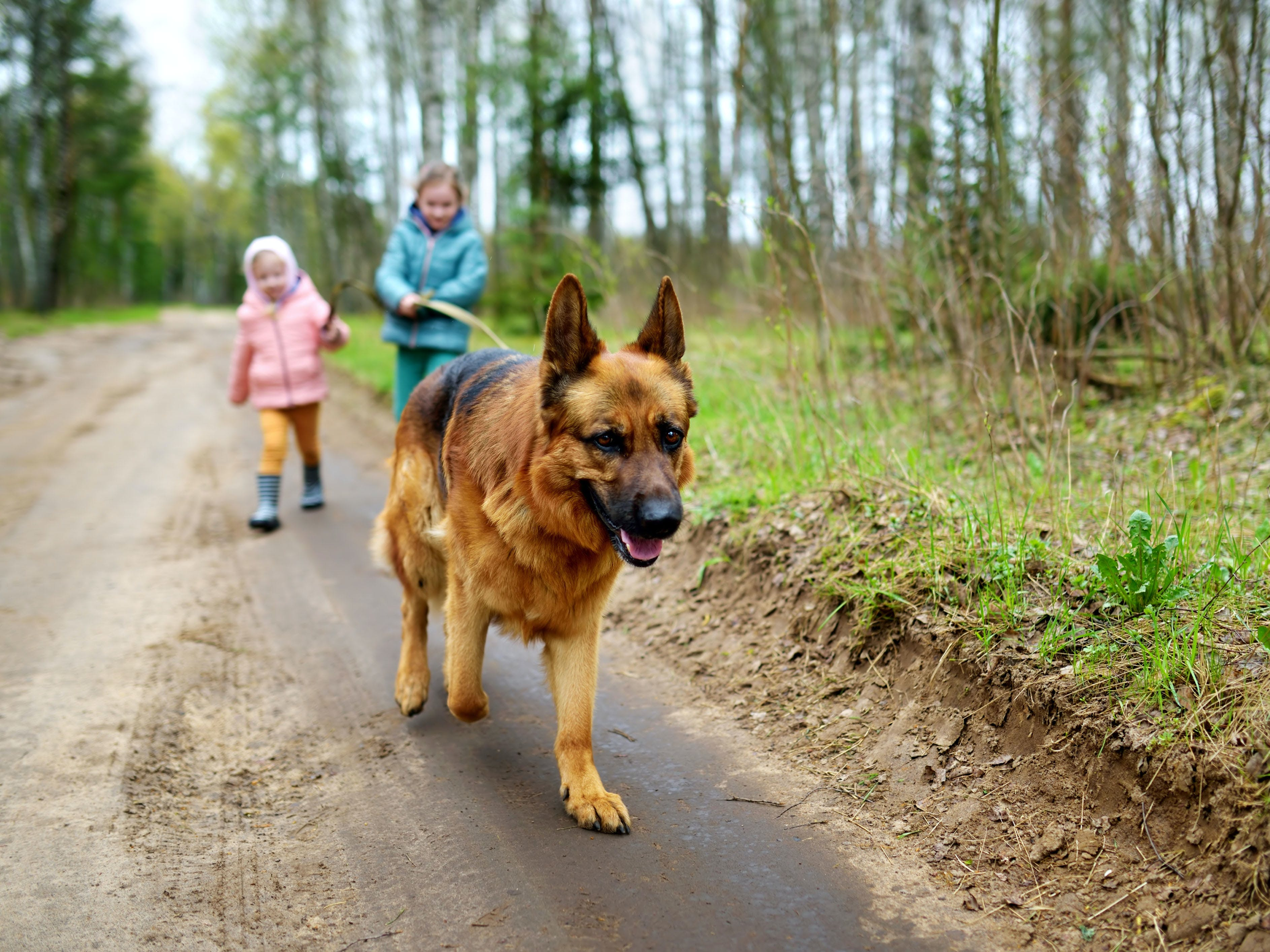 daily-wag-dog-walking-101-etiquette-rules-for-hiking-trails-hero-image