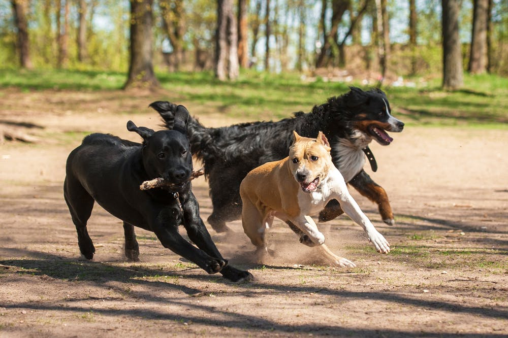 daily-wag-7-new-dog-park-etiquettes-you-should-know-about-today-hero-image