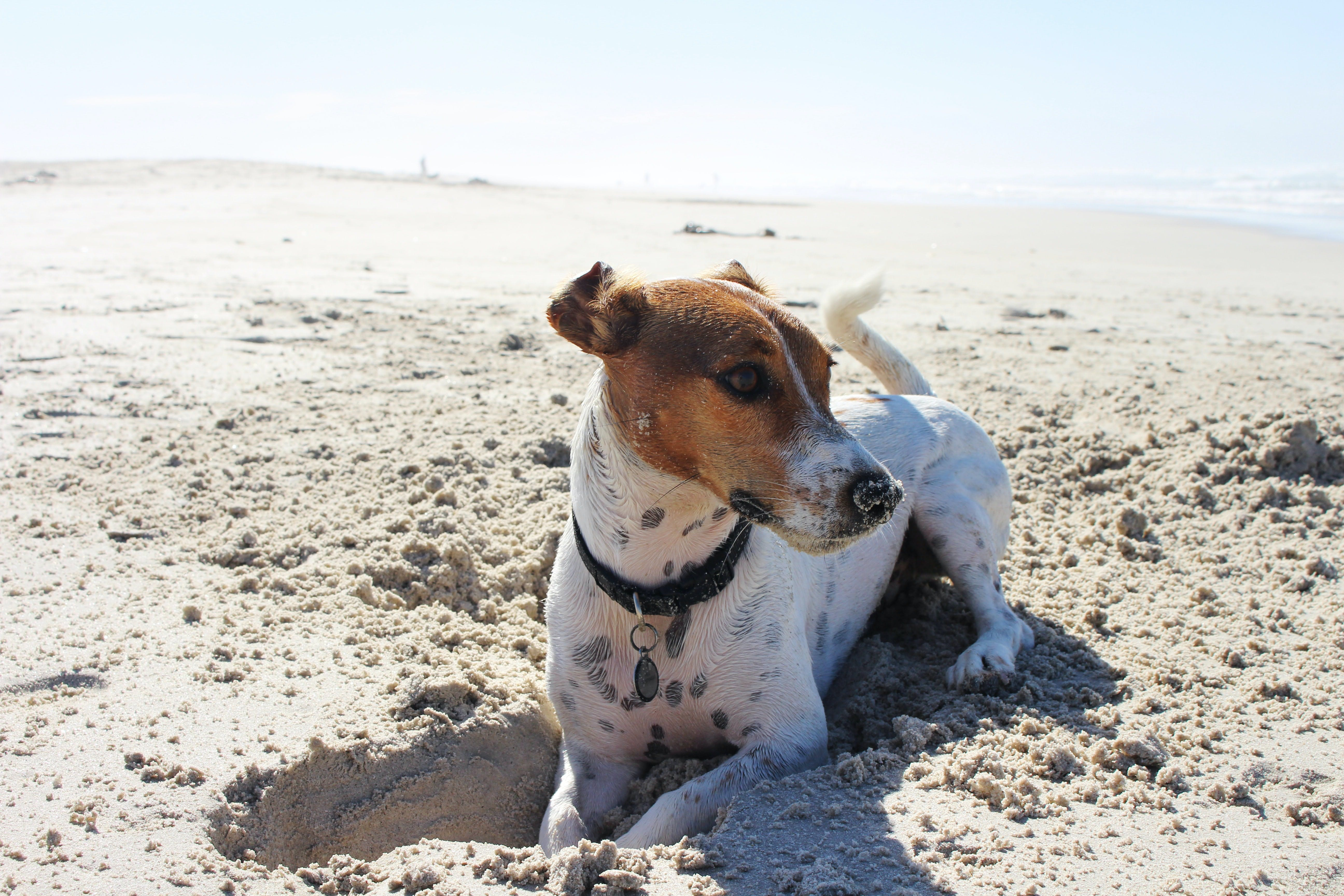 daily-wag-7-new-dog-beach-etiquettes-you-should-know-about-today-hero-image