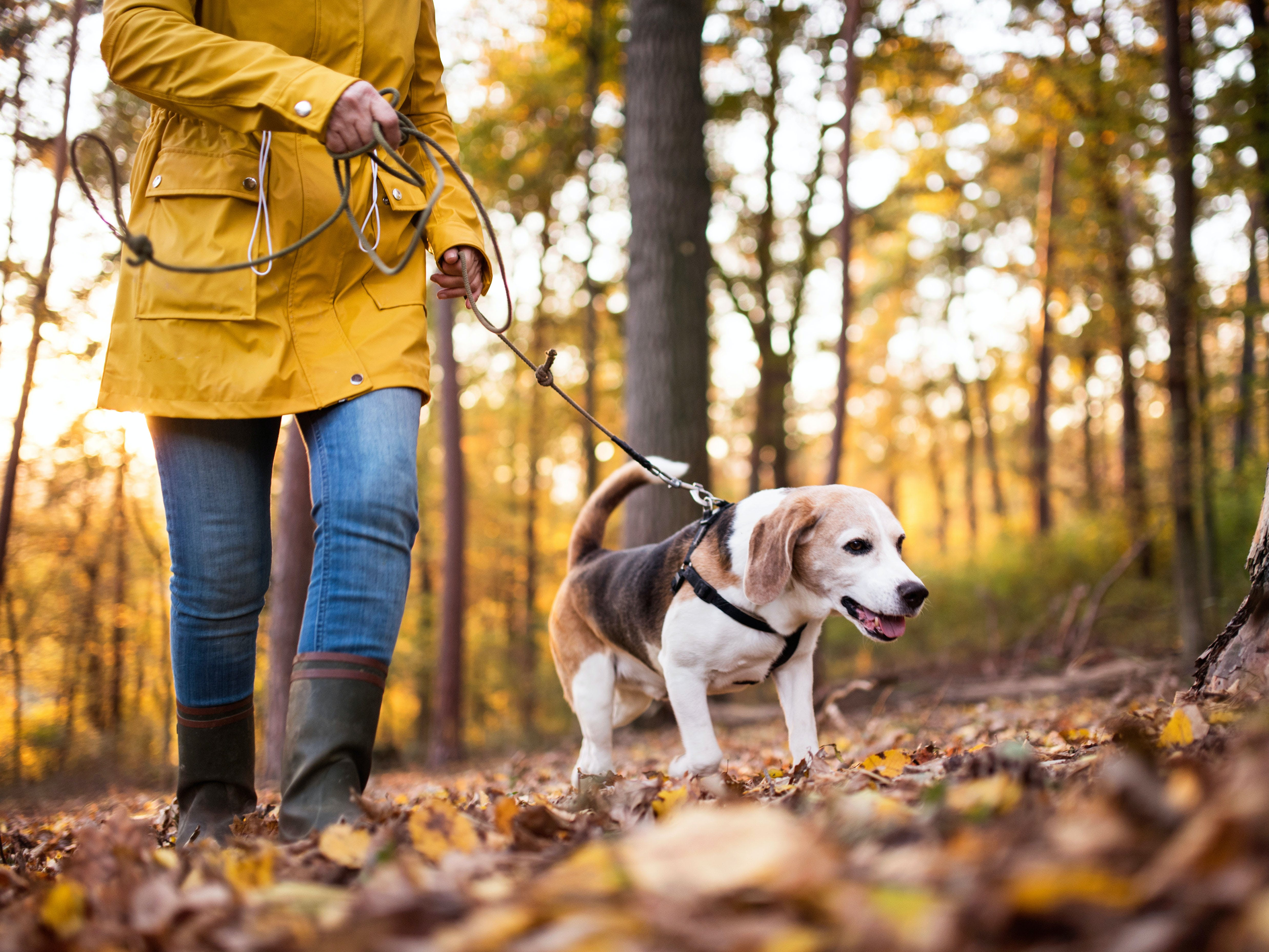 daily-wag-9-helpful-tips-on-dog-walking-in-the-woods-hero-image