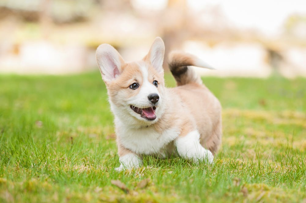 daily-wag-7-puppy-raising-mistakes-to-avoid-hero-image