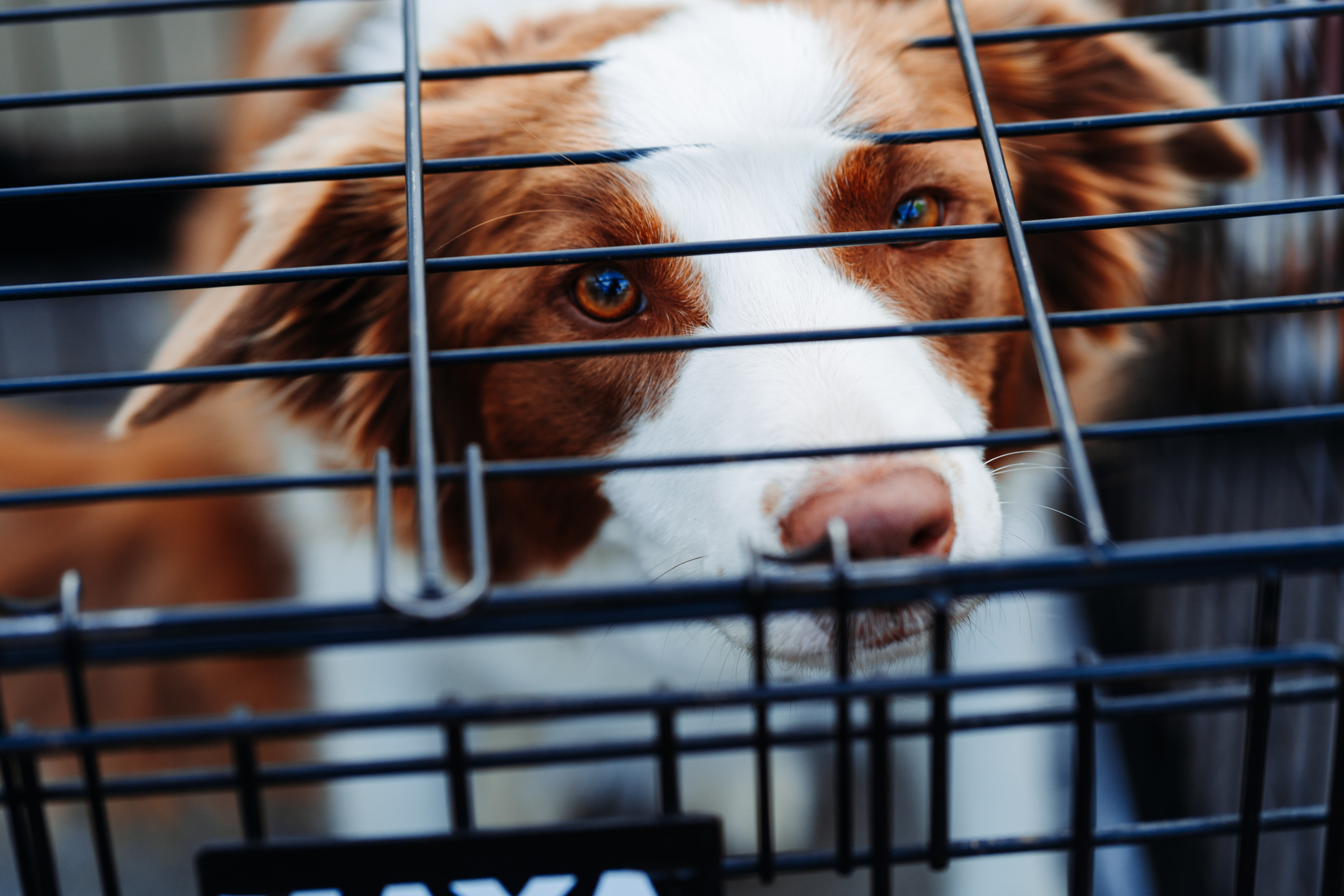 daily-wag-traveling-with-a-dog-crate-what-you-need-to-know-hero-image