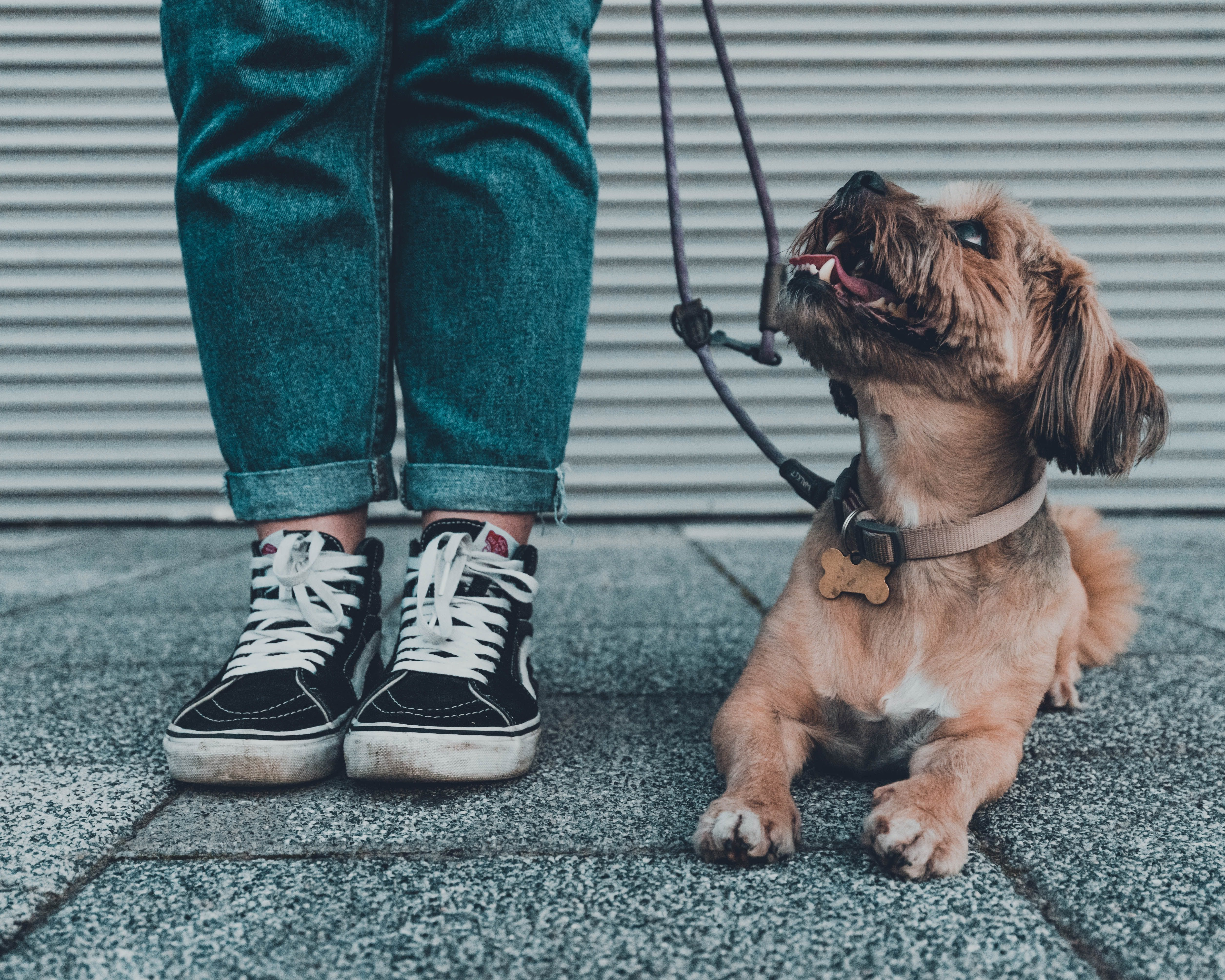 daily-wag-tips-on-how-to-handle-a-off-leashed-dog-that-approaches-you-hero-image