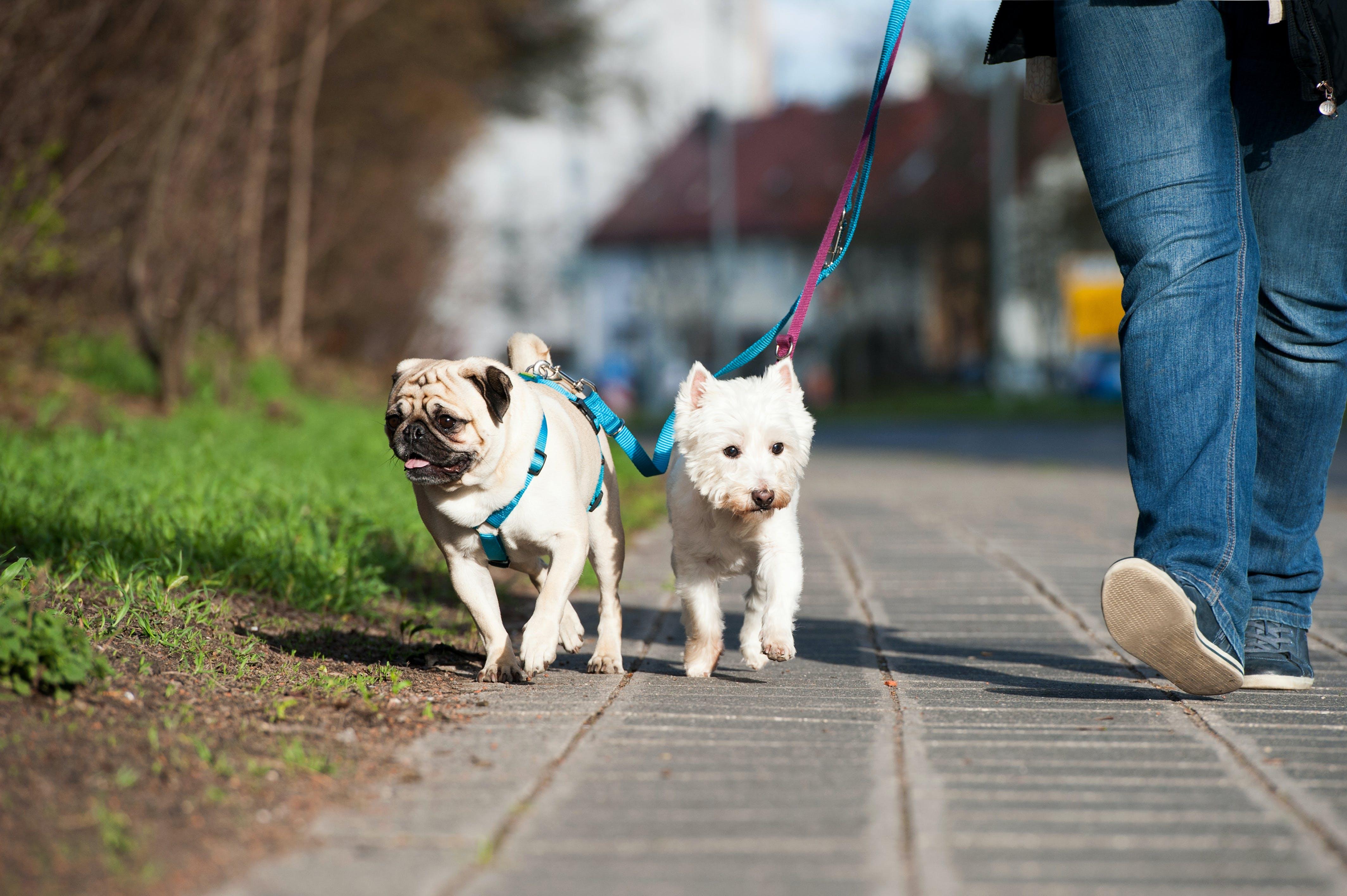 daily-wag-meet-ashley-a-atlanta-wag-dog-walker-spotlight-story-hero-image