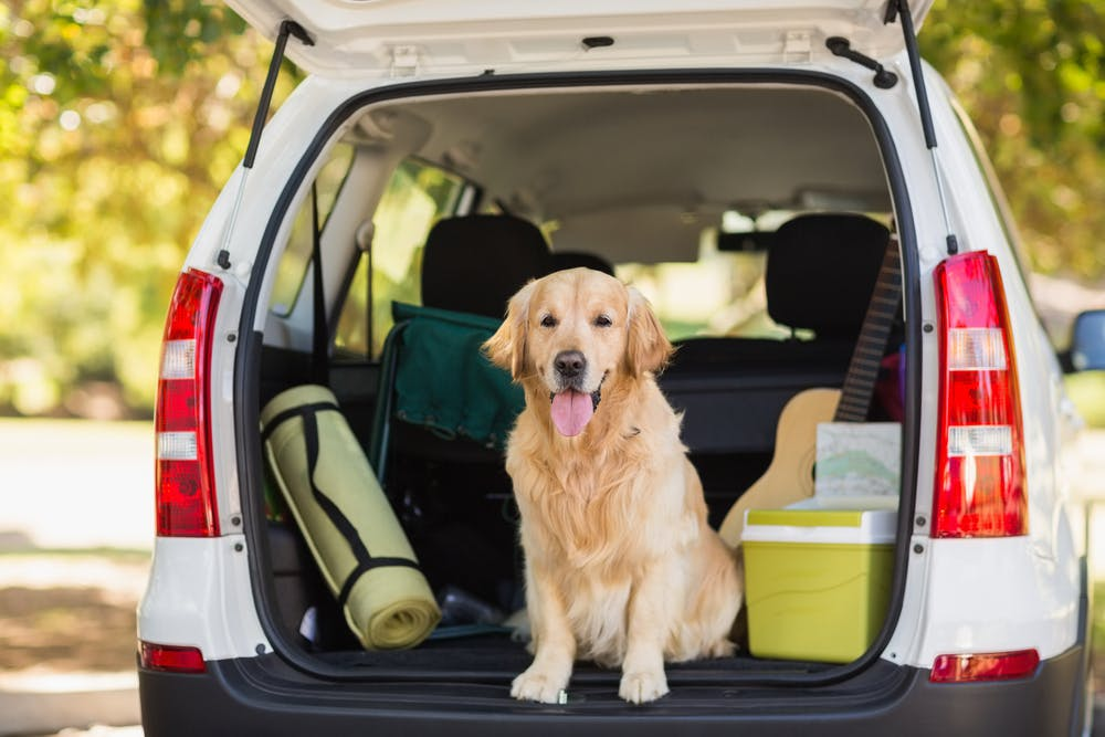 daily-wag-top-5-phoenix-campgrounds-to-visit-with-your-pup-this-summer-hero-image