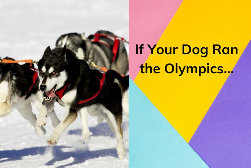 daily-wag-if-your-dog-ran-the-olympicsheres-what-they-can-compete-in-hero-image