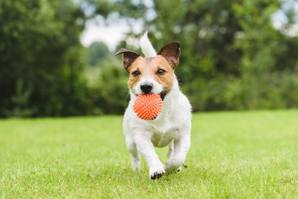 daily-wag-5-furrific-ways-to-celebrate-spoil-your-dog-day-2021-hero-image