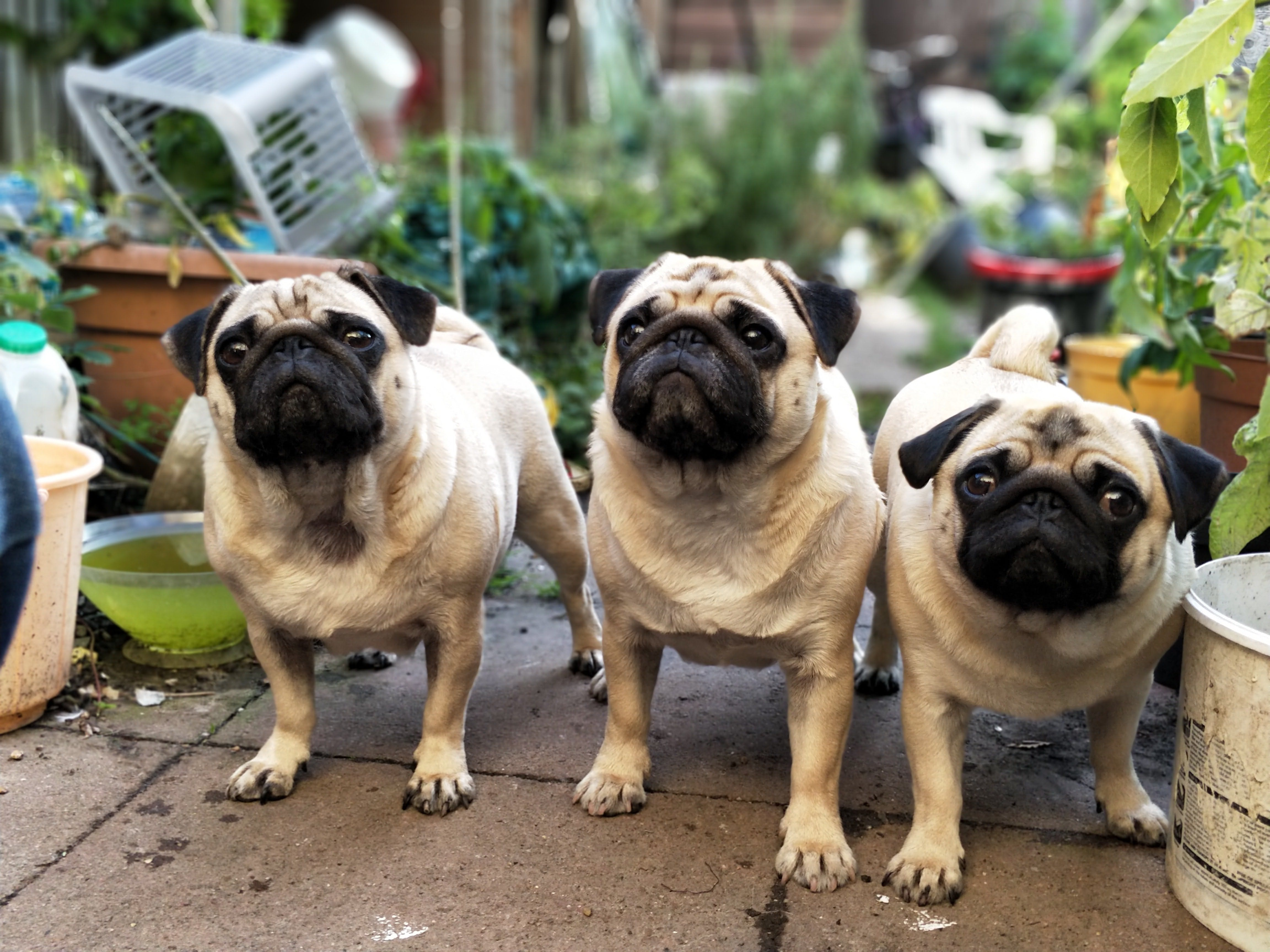 daily-wag-pet-safety-7-tips-to-remember-during-extreme-weather-season-hero-image