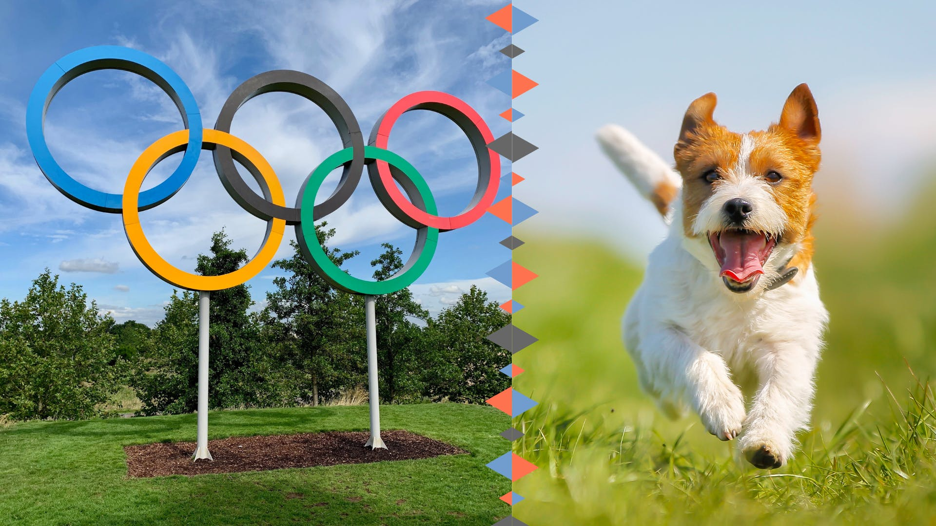daily-wag-8-dog-breeds-as-olympic-events-hero-image