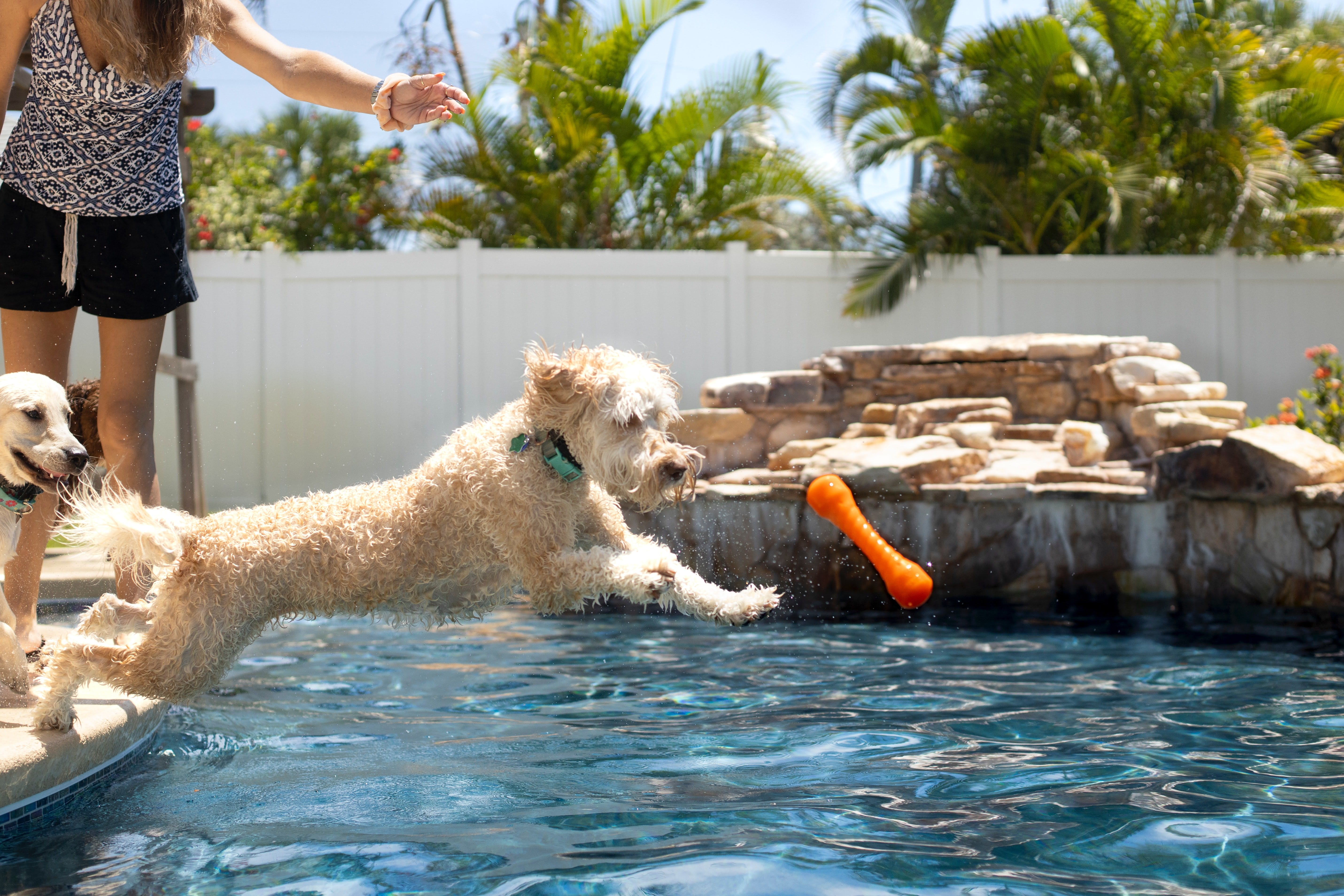 daily-wag-how-to-make-the-best-of-the-dog-days-of-summer-with-your-pup-hero-image