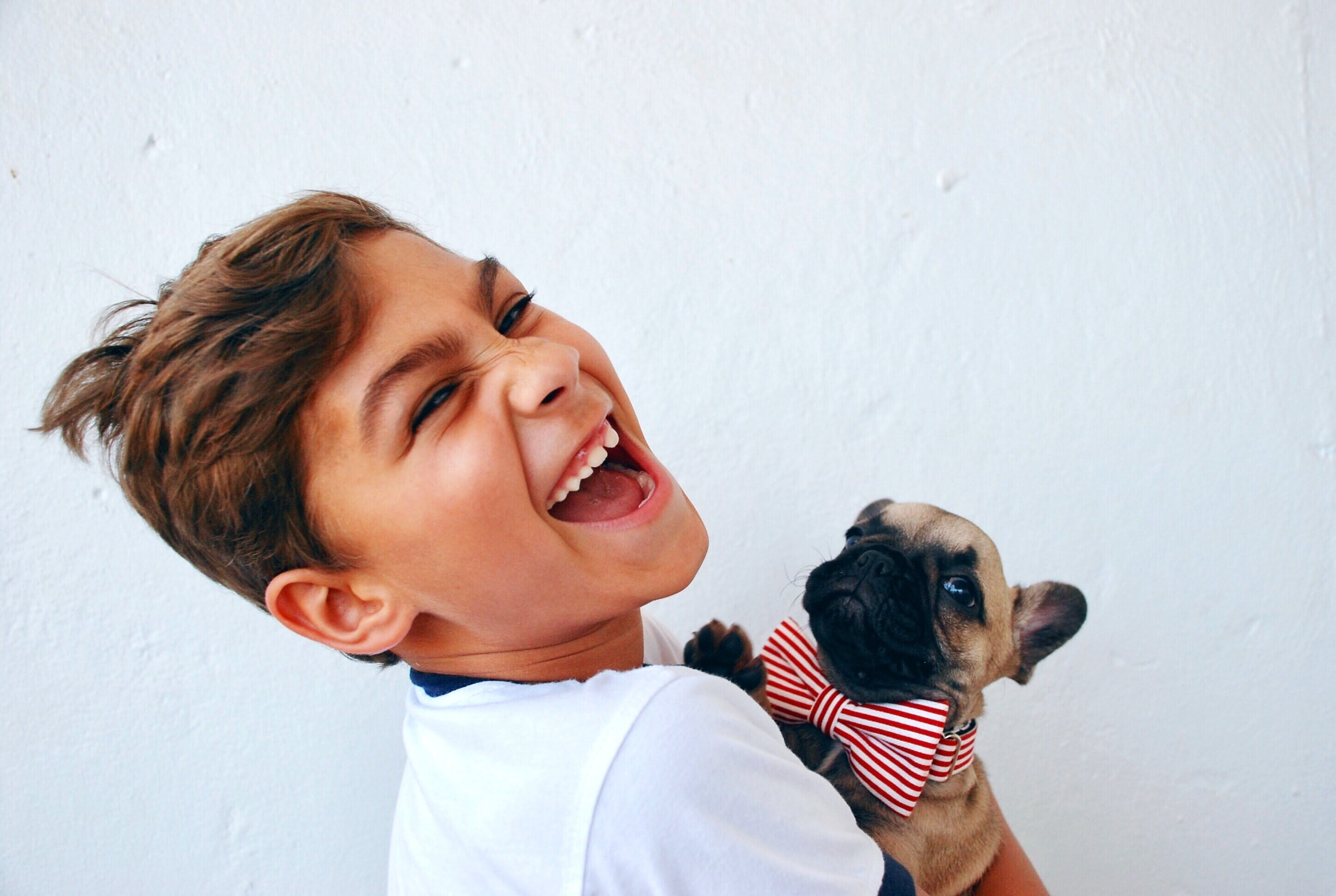 daily-wag-pet-safety-tips-labor-day-advice-for-keeping-our-furbabies-safe-hero-image