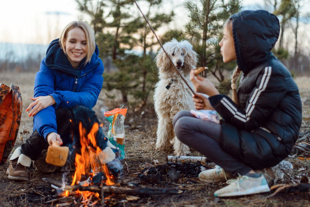 daily-wag-top-5-oregon-campgrounds-to-visit-with-your-pup-this-summer-hero-image