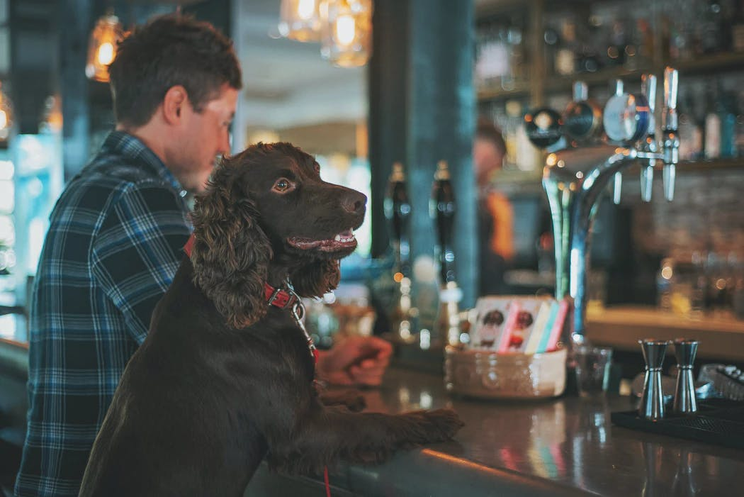 daily-wag-everything-you-need-to-know-about-dog-beer-hero-image