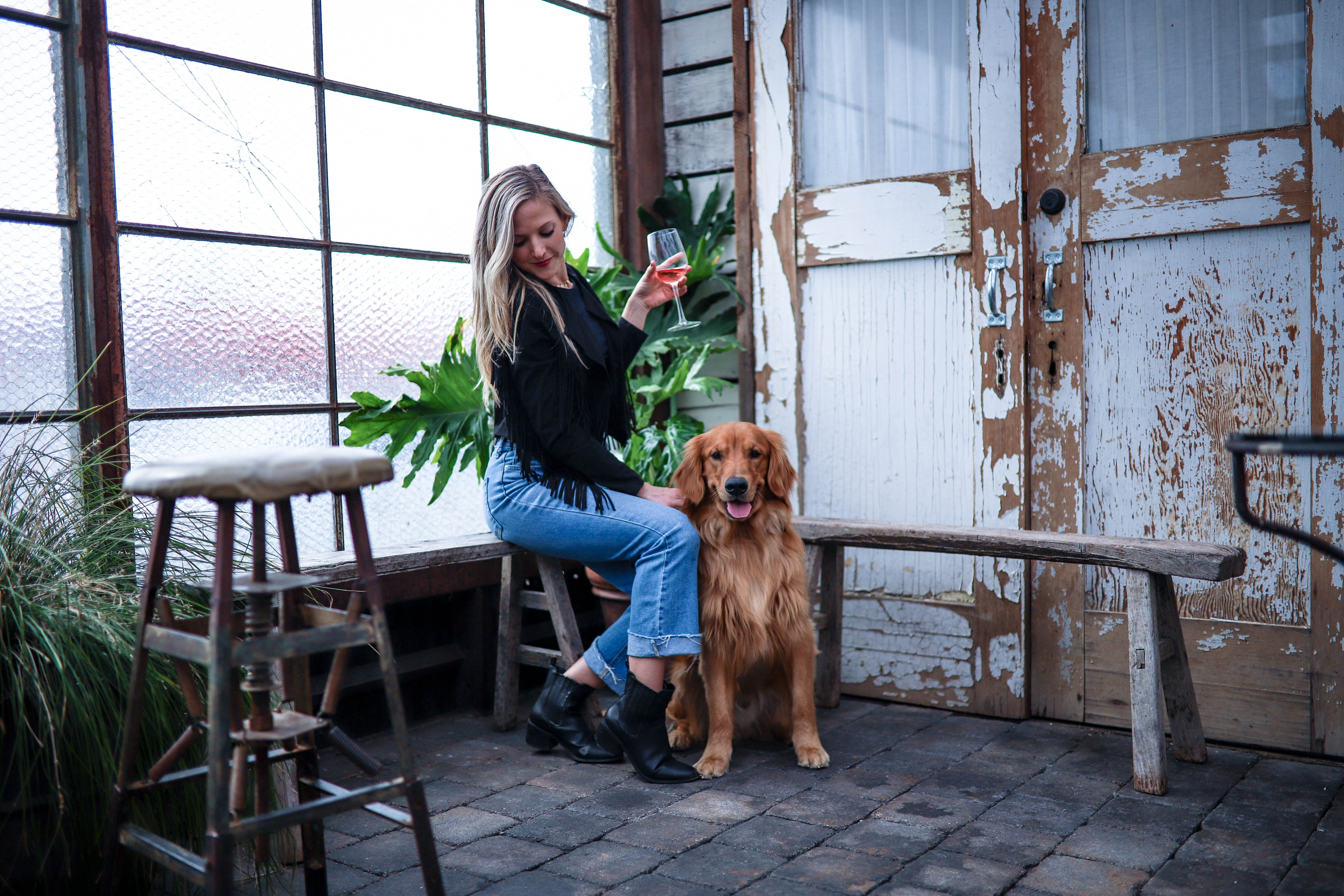 daily-wag-5-dog-friendly-bars-in-tampa-your-pup-should-visit-hero-image