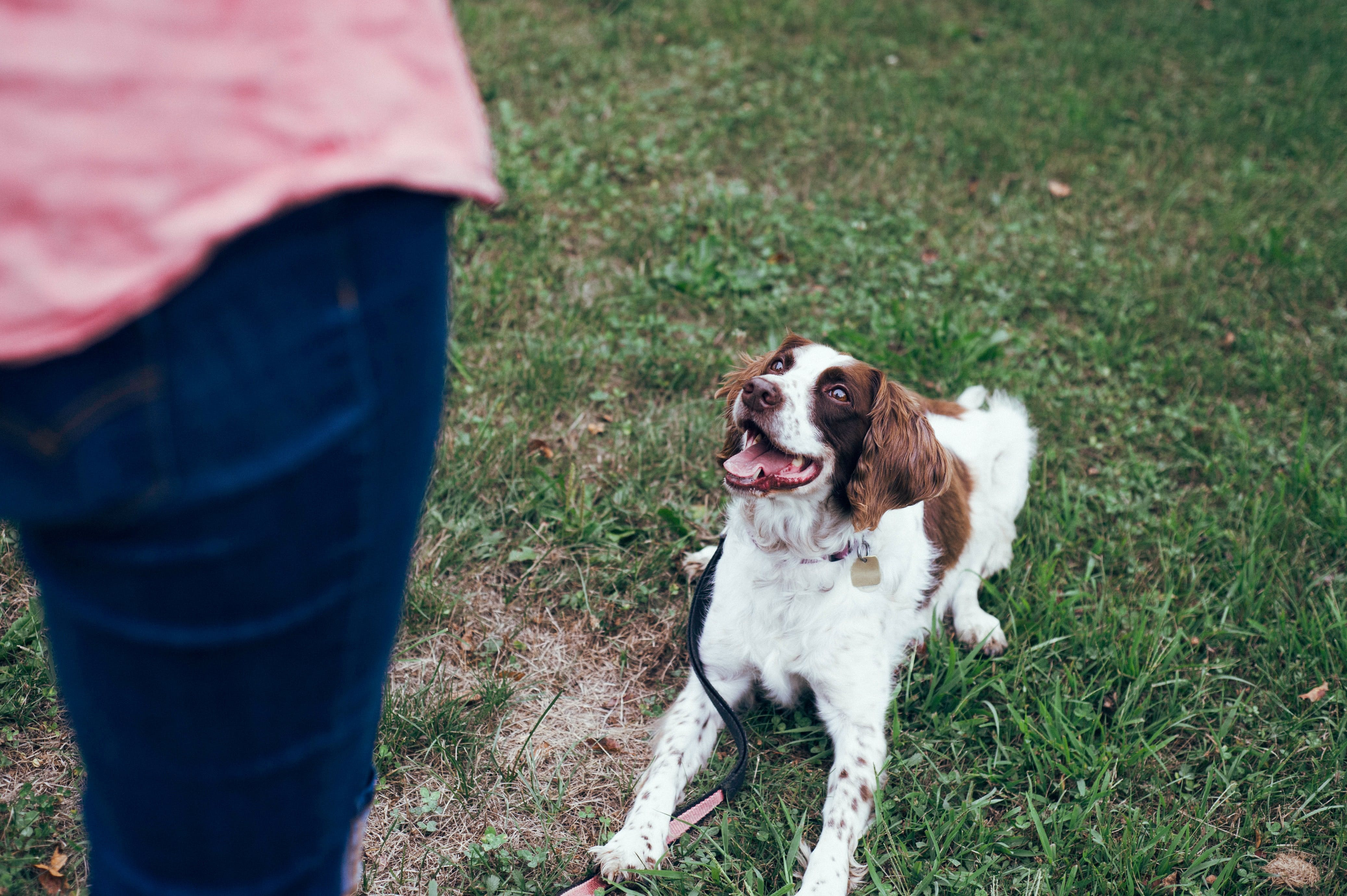 daily-wag-5-training-tricks-to-keep-your-dog-safe-in-a-disaster-hero-image