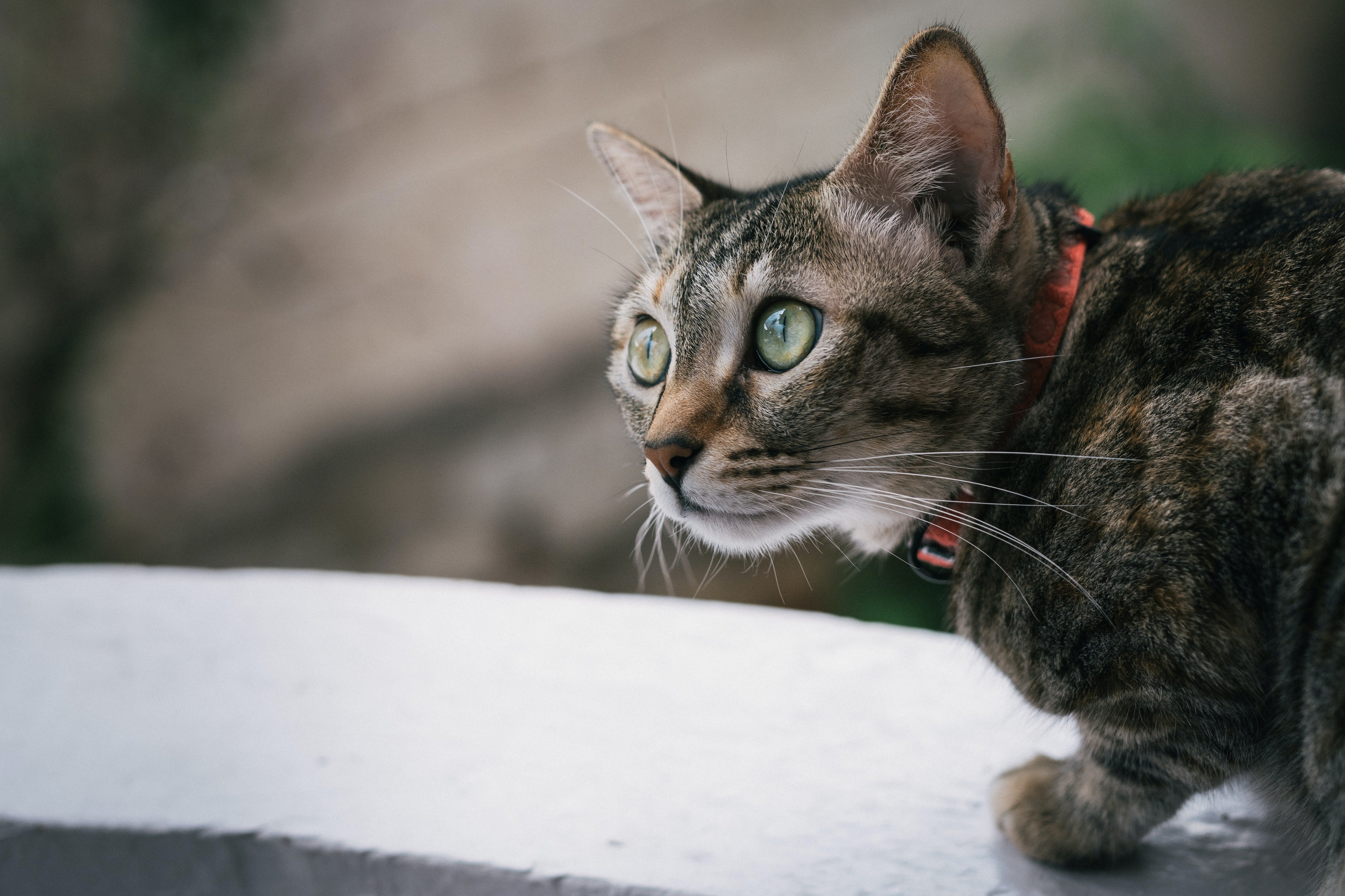 daily-wag-national-meow-like-a-pirate-day-7-fun-facts-about-a-cats-meow-hero-image