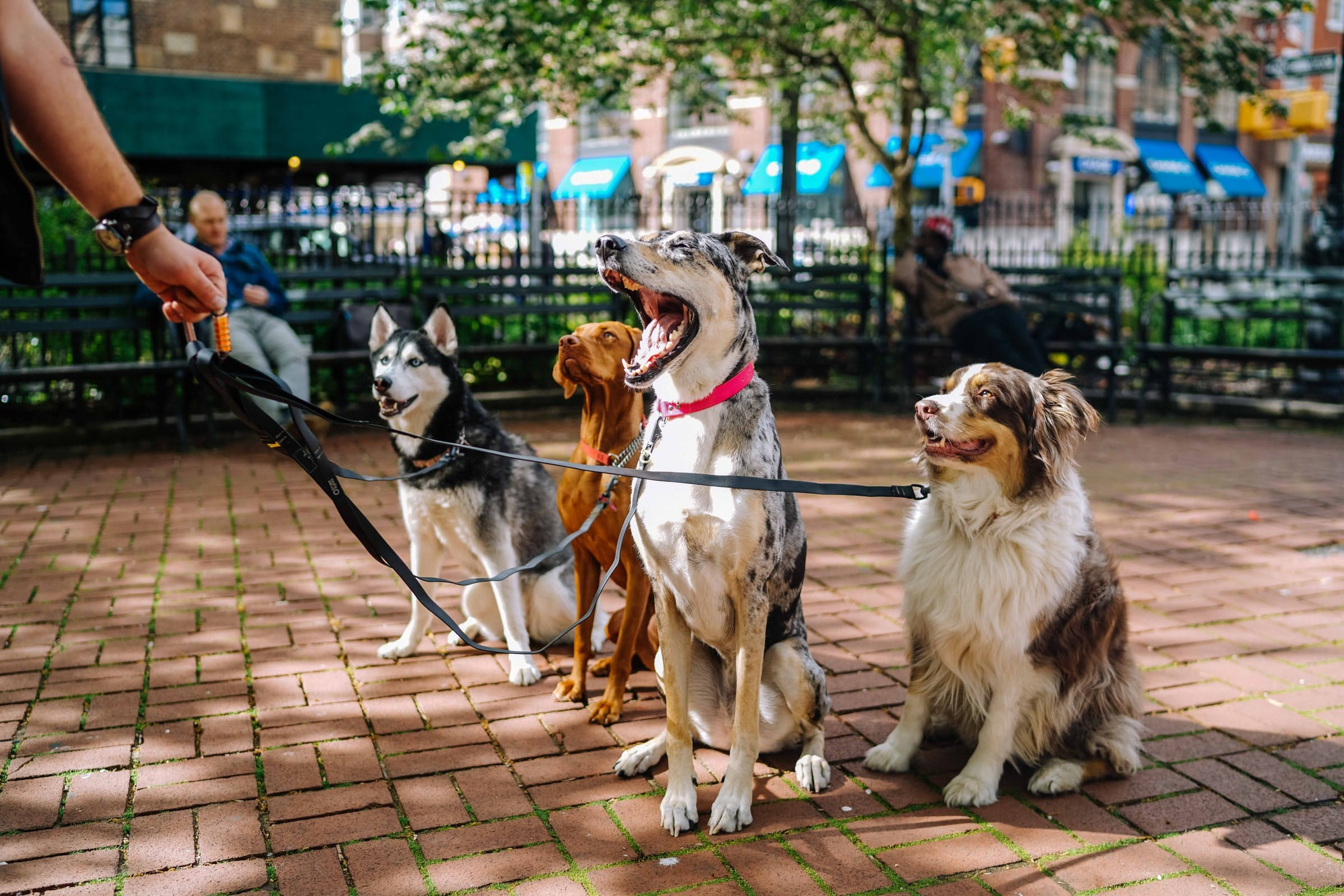 daily-wag-how-to-organize-a-dog-walking-club-in-your-local-neighborhood-hero-image