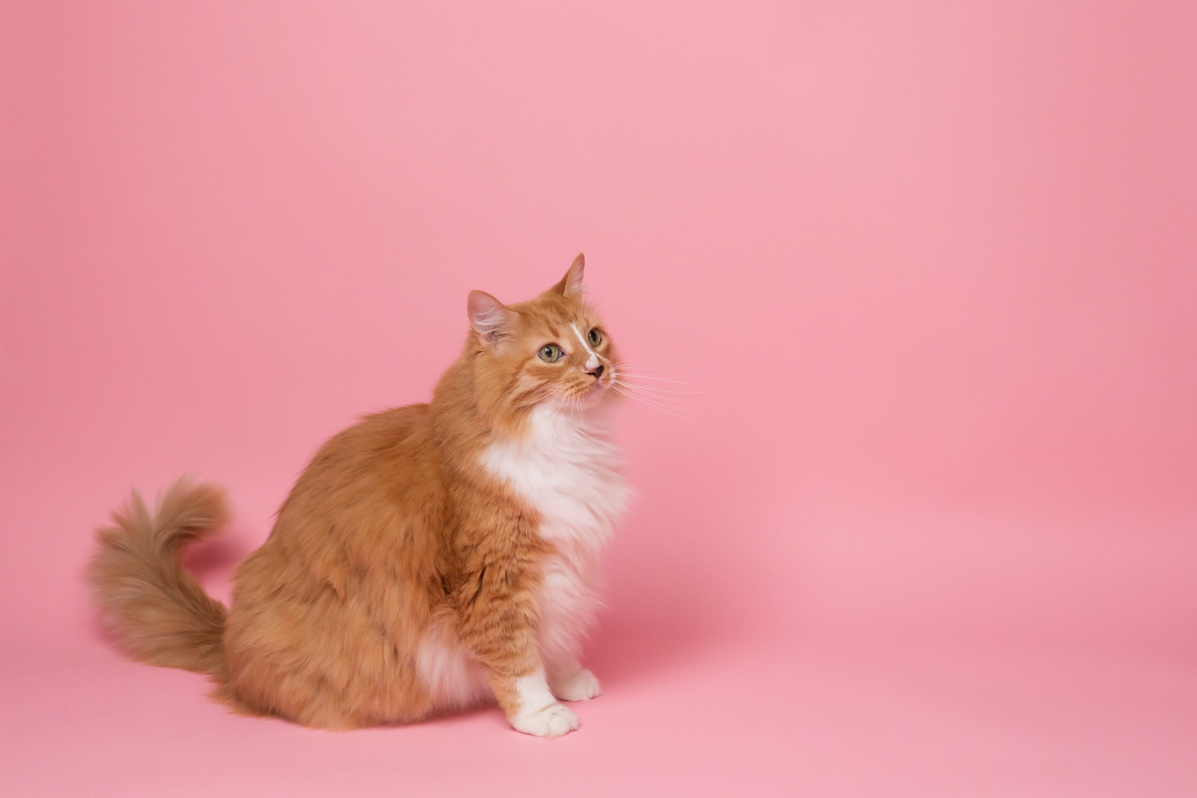 daily-wag-10-easiest-training-tricks-to-teach-your-cat-hero-image