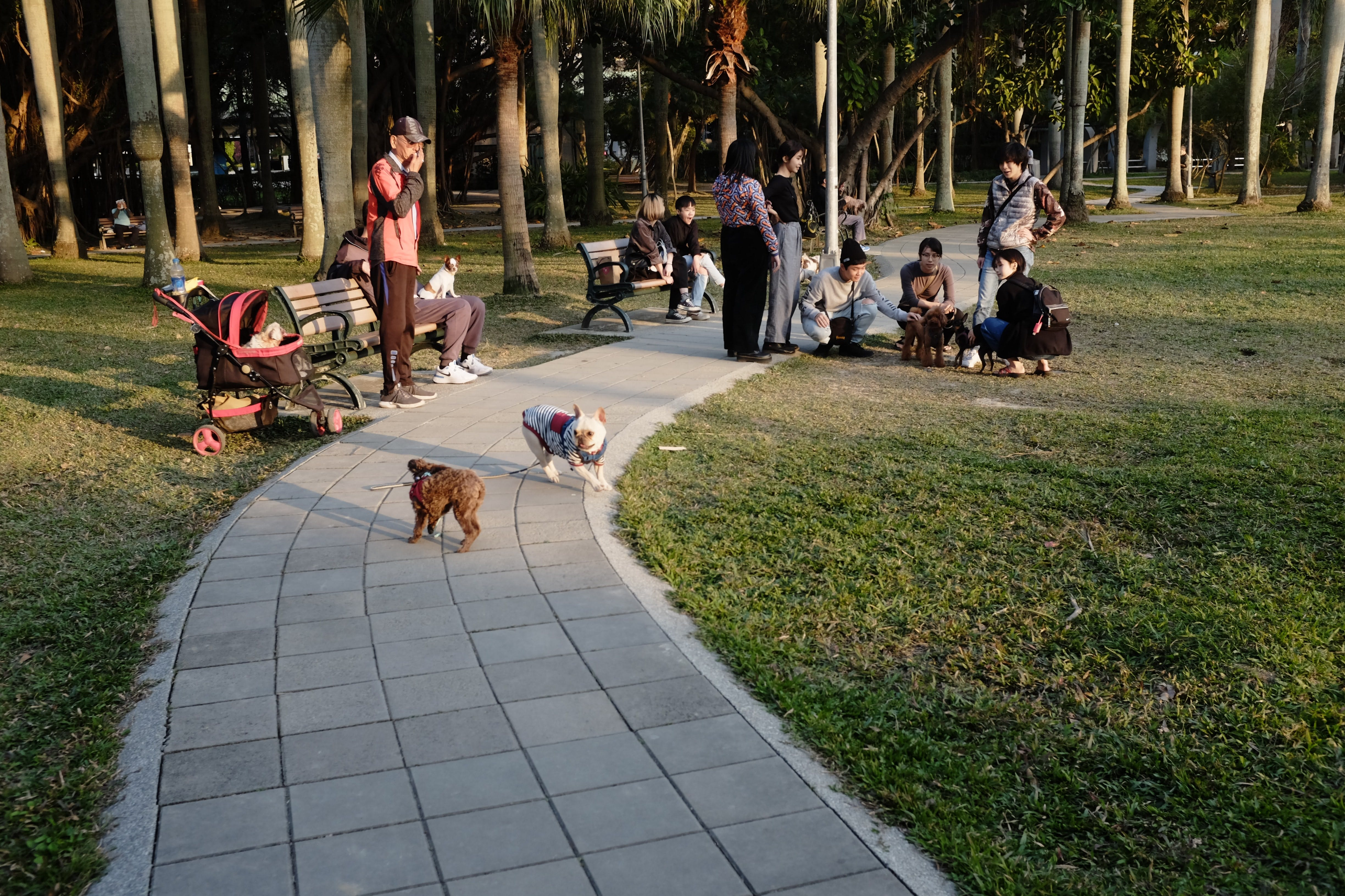 daily-wag-is-it-safe-to-take-your-dog-to-the-dog-park-hero-image