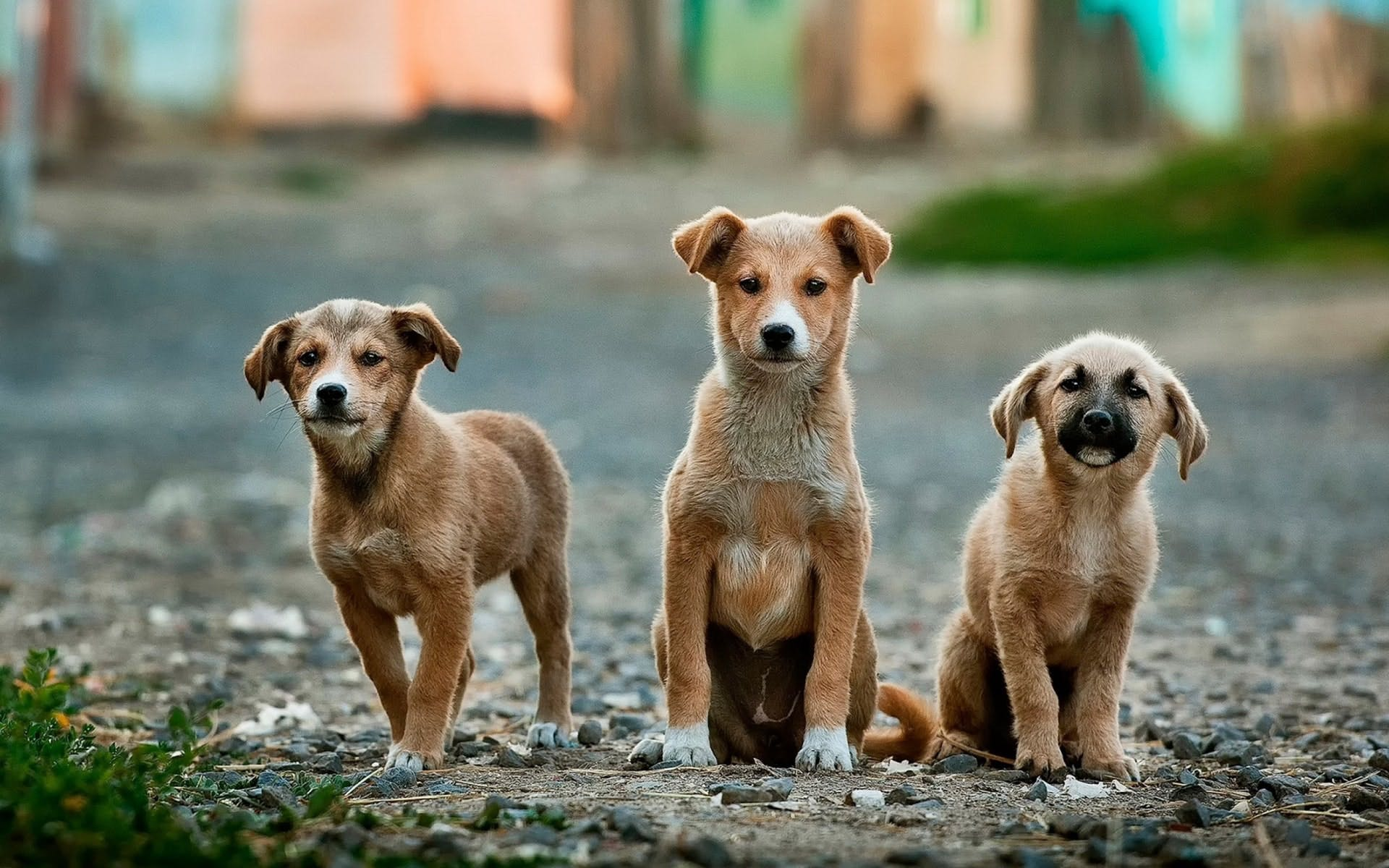 daily-wag-how-common-is-rabies-among-stray-dogs-in-the-us-hero-image