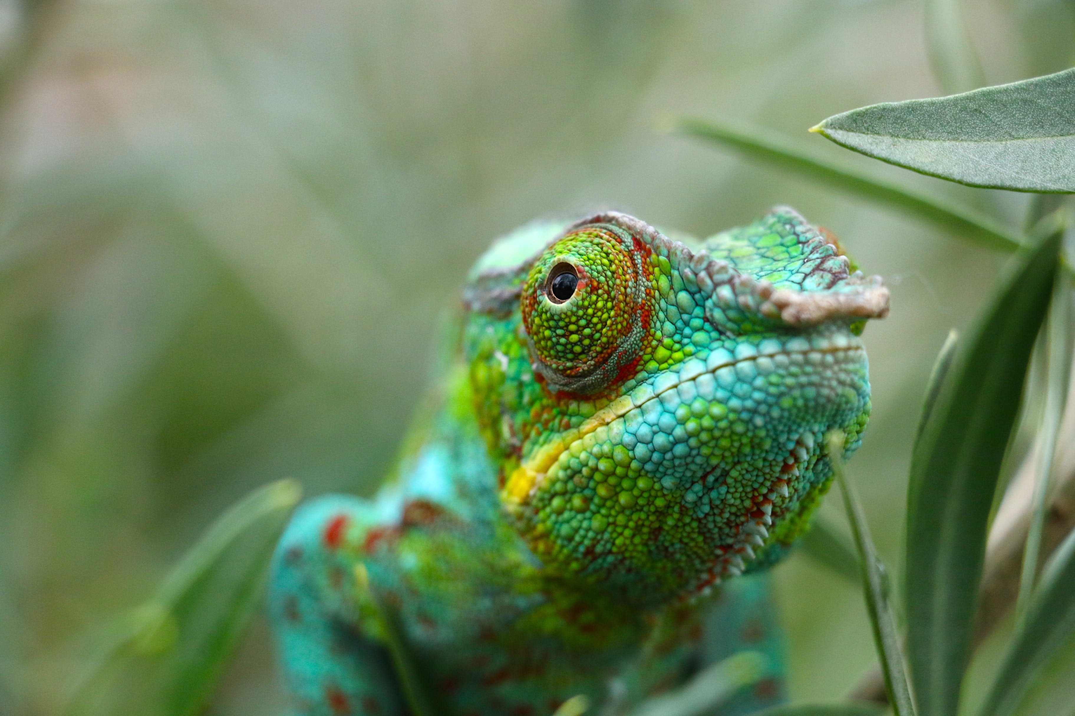 daily-wag-national-reptile-awareness-day-5-crazy-facts-about-reptiles-hero-image