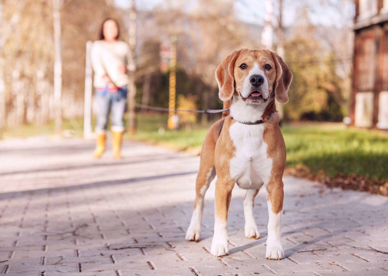 daily-wag-meet-sierra-an-austin-college-student-dog-walker-spotlight-story-hero-image