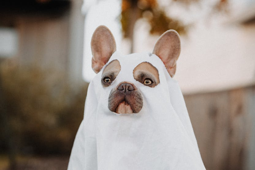 daily-wag-best-themed-halloween-costumes-for-your-dog-2021-edition-hero-image
