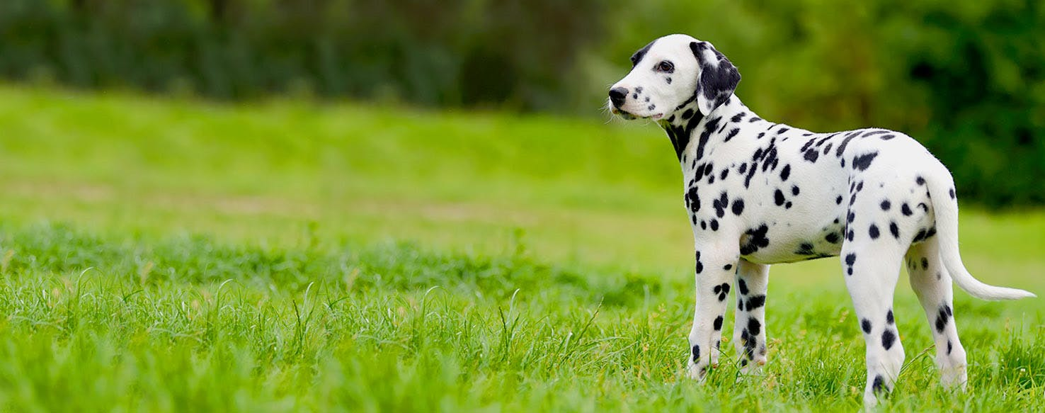 Deaf Dog Names Popular Male And Female Names Wag