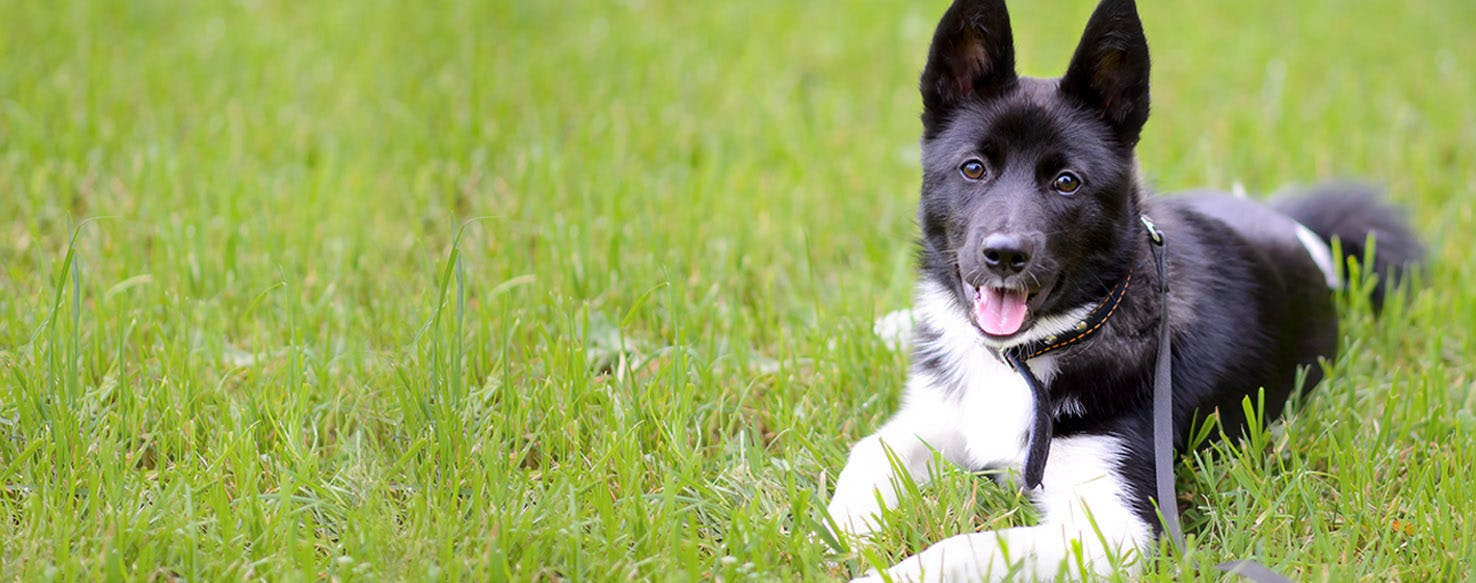 World of Warcraft Dog Names | Popular Male and Female Names