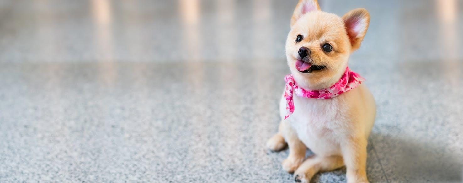 Cowboy Bebop Inspired Dog Names Popular Male And Female