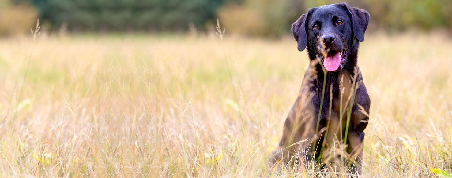 Dog Names Meaning Black | Popular Male and Female Names | Wag!
